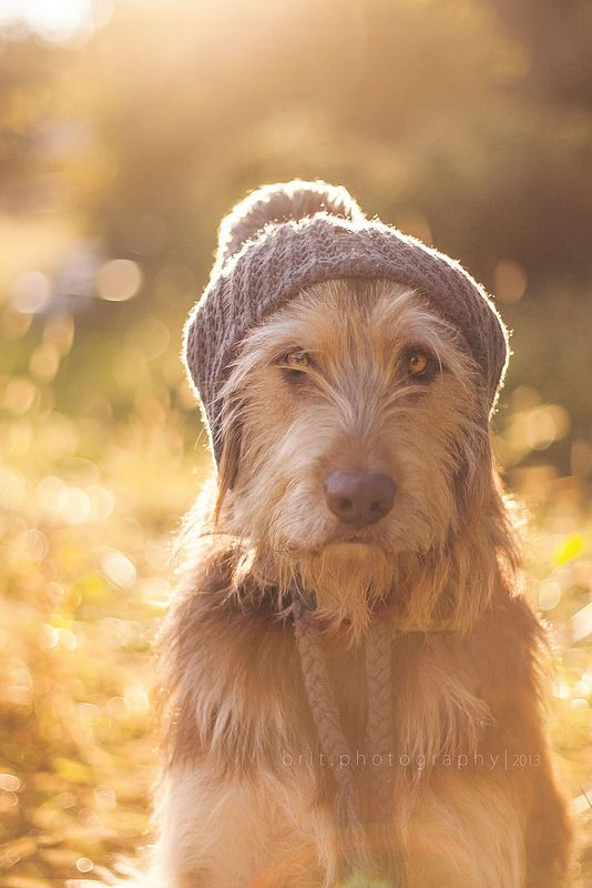 Scruffy Dog sporting a Touque! By Brittany Howard                                                                                                                                                      More