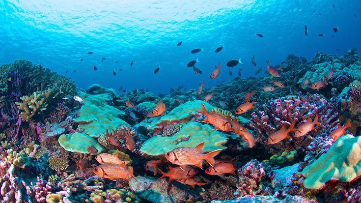 Vous aimez ou aimeriez faire de la #plongée ? Nous avons déniché pour vous les meilleurs spots du monde. #voyage #vacances
