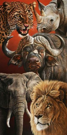 """BIG FIVE PORTRAIT 1"" by dawie mocke 