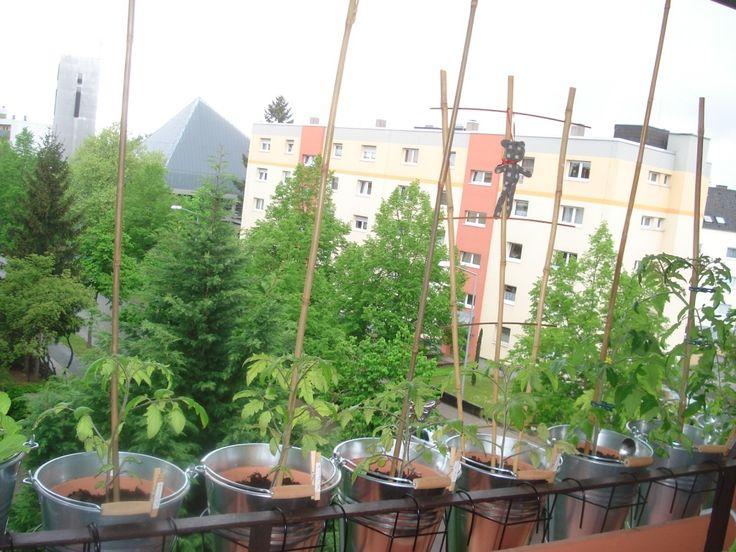 17 best ideas about tomaten pflanzen on pinterest. Black Bedroom Furniture Sets. Home Design Ideas