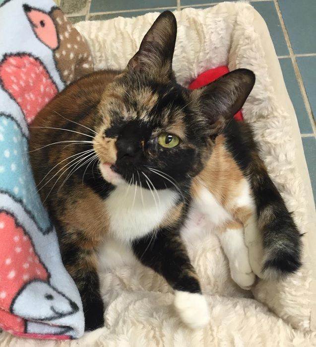 Adopt Maddie On Foster Cat Pet Adoption Cute Cats
