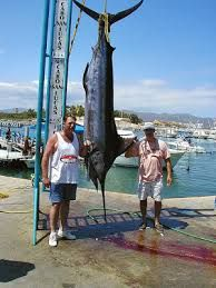 Catch a marlin  www.CaboHomesandVillas.com #CaboActivities