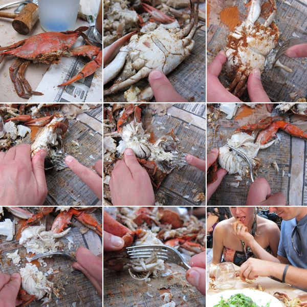 How to pick Maryland steamed crabs (grew up doing this - could do it in my sleep! - does anyone REALLY need to be taught this??)
