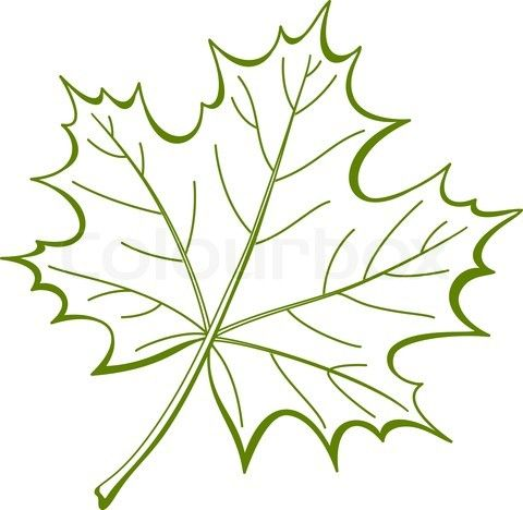 Vector of 'Leaf of a maple, vector'