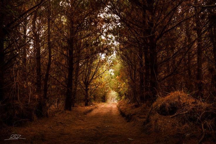 Ruta del Cabo Busto en otoño