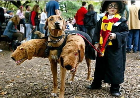 Harry Potter - this is too cute!: Halloweencostumes, Dogs, Halloween Costumes, Harrypotter, Funny, Dog Costumes, Harry Potter, Kids, Costume Idea