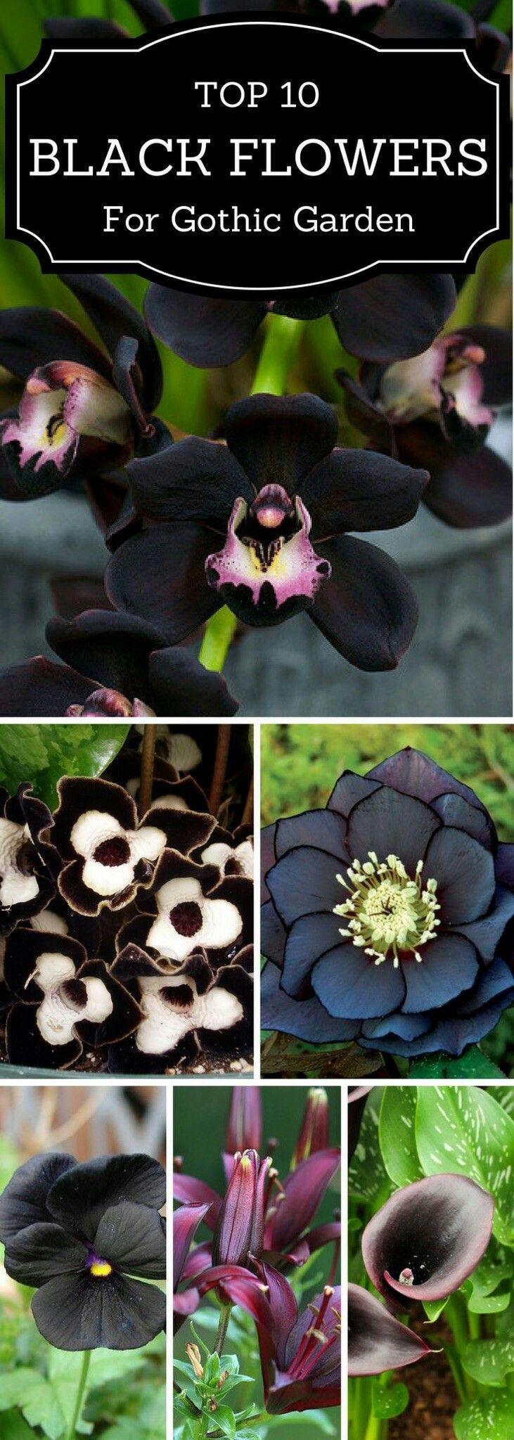 Top 10 Black Flowers for Gothic Garden