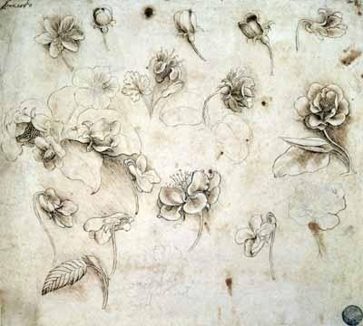 Leonardo Da Vinci work. It shows various flower studies of grass-like plants.I
