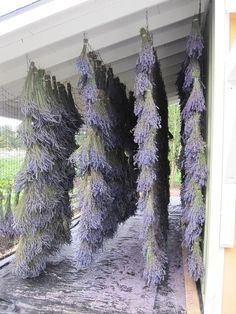 When you start your farm, also set aside an area to grow lavender to sell at the markets as is and with things made from the lavender