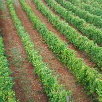 Il Verro - Azienda Agricola