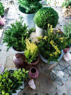 Die Besten Zimmerpflanzen Für Anfänger