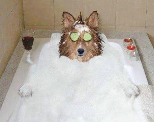 il prend son bain