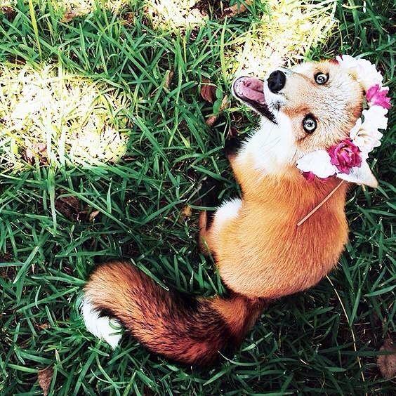 Mutlu bir hafta sonu olsun   #weekend #happy #animal #haftasonu #fox #nature #naturelovers #animallover