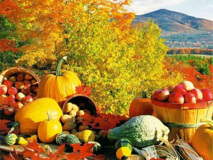 Fall,Halloween,thanksgiving