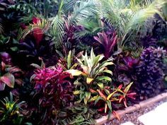 better homes and gardens australia sub tropical garden -pool - Google Search