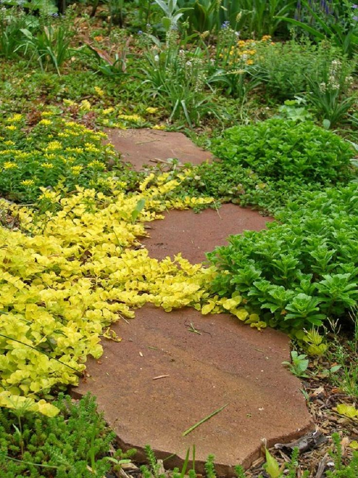 1000 images about outside plants groundcovers on for Perennial ground cover plants for sun