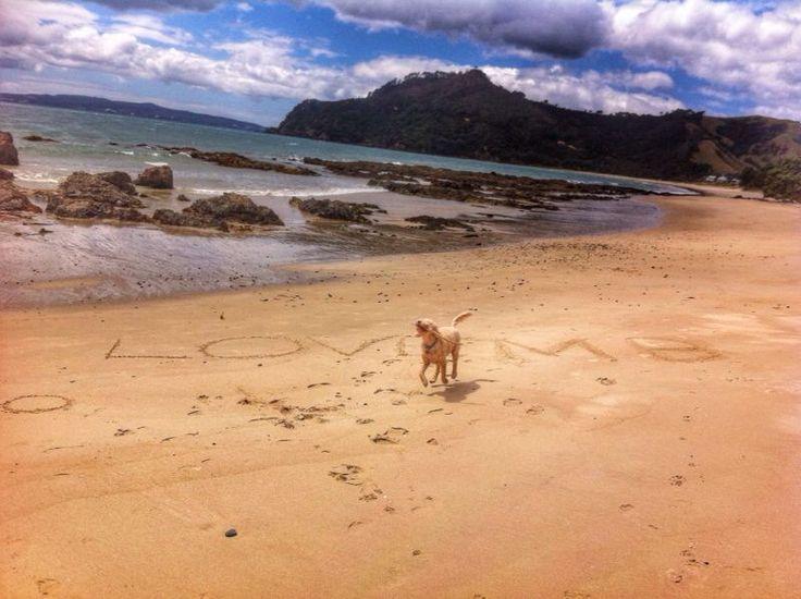 Coromandel New Zealand Spoodle on the Beach