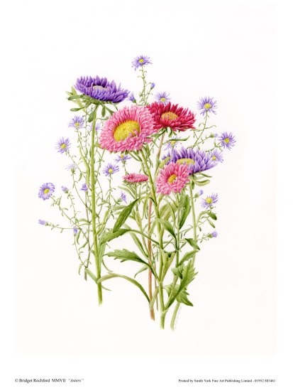 Asters and sweet little things, I just wanna cuddle with them.