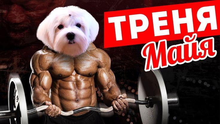 Тренировка Майя • Дрессировка собаки Мальтийской болонки • Maltese Dog t...