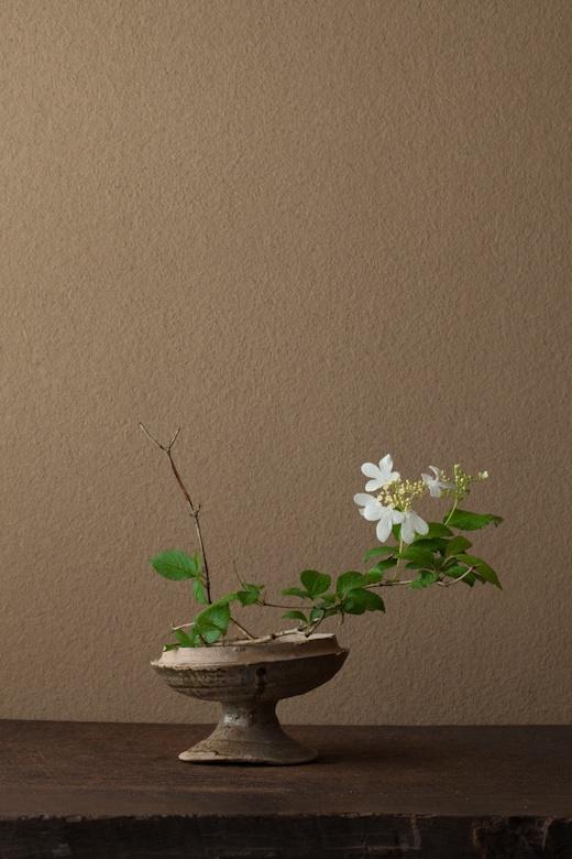 by Toshirō Kawase ( 川瀬敏郎 | 一日一花 | 2012/6/12 )