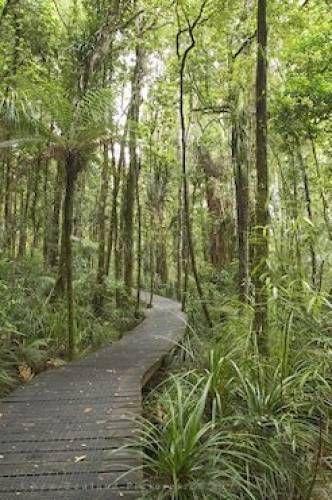 Waipoua Forest, North Island, New Zealand