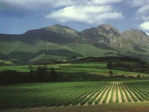 Cape Winelands (Wine route) - South Africa