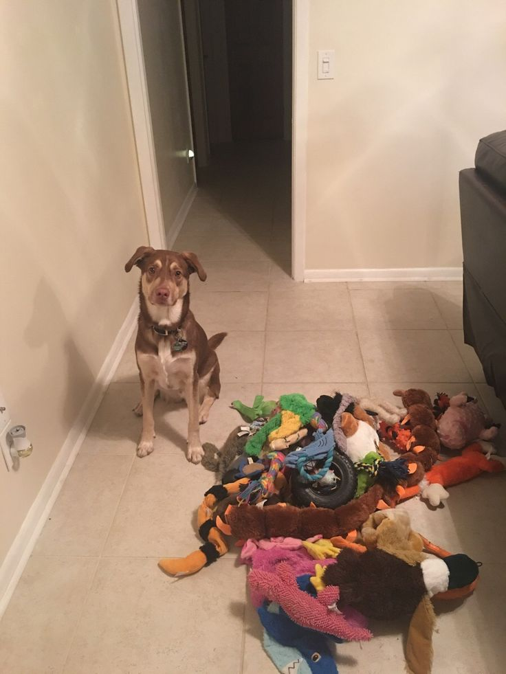 I don't think he has quite enough toys. http://ift.tt/2kbEsmU