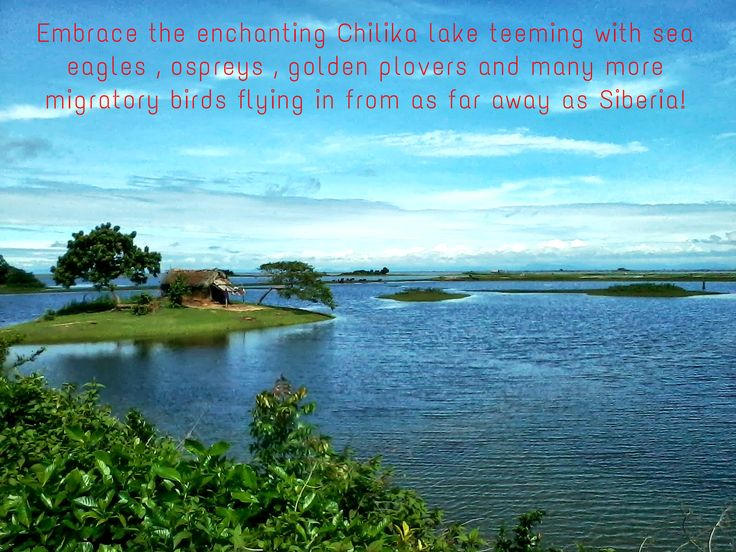 Embrace the enchanting #ChilikaLake teeming with sea eagles , ospreys , golden plovers and many more migratory birds flying in from as far away as Siberia! 