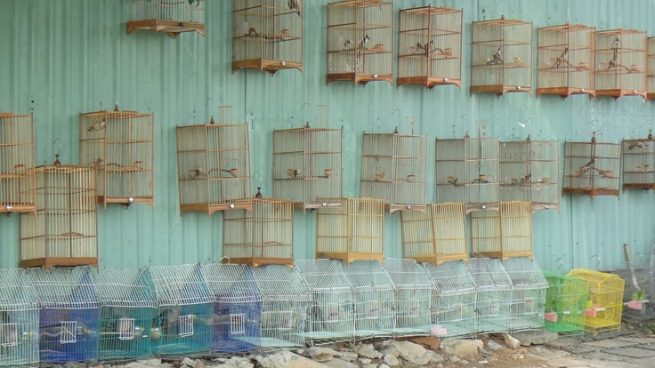 Something a bit cagey about this bird dealer on Bach Dang Street in Danang