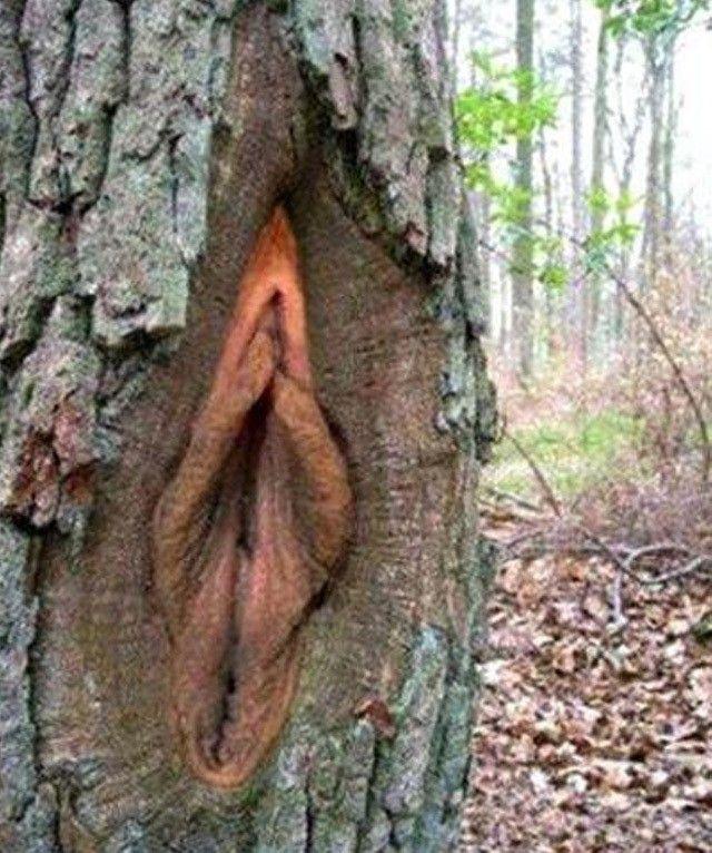 Con una longitud de ocho a 10 cm, la vagina se convierte en un laberinto resguardado por una alfombra de feromonas y trampas de los perfumes.