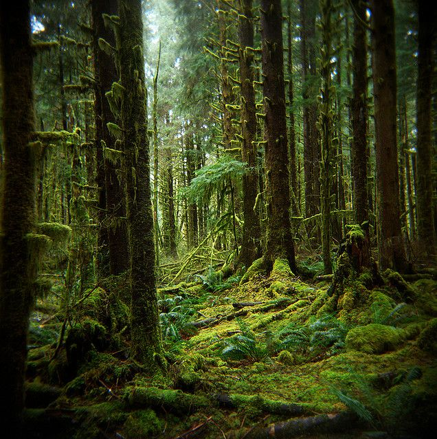 The memory of forests, Hoh Rain Forest, Olympic National Park, by Zeb Andrews