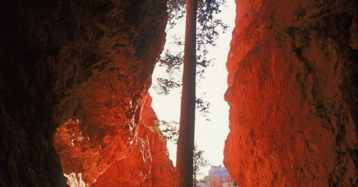 Proyectos para niños para hacer rocas sedimentarias. La geología, el estudio de las rocas, es una rama de las ciencia naturales que aprenden todos los niños en edad escolar. Los alumnos aprenden los distintos tipos de rocas (sedimentarias, metamórficas e ígneas) y su composición. Cada tipo de roca tiene características diferentes y contiene pistas sobre la formación y la historia de la Tierra. Hay ...