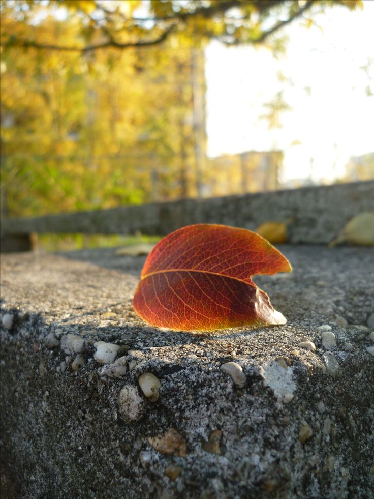 Walks in autumn