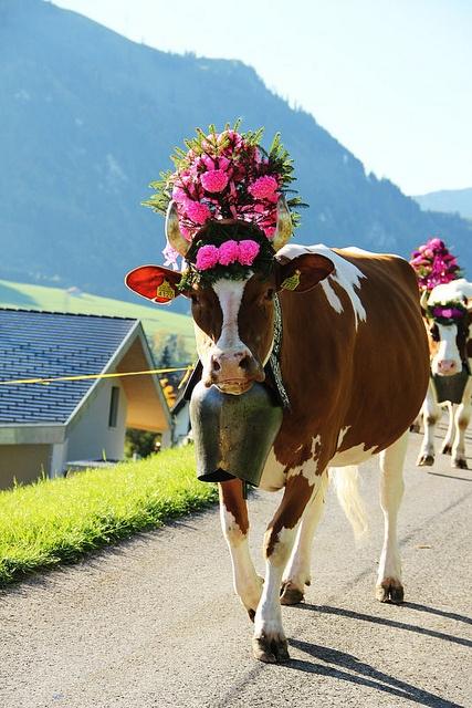 Desalpe - Swiss alpine festival