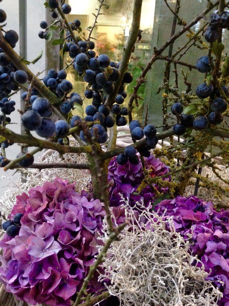 Wildpflaume trifft Hortensien