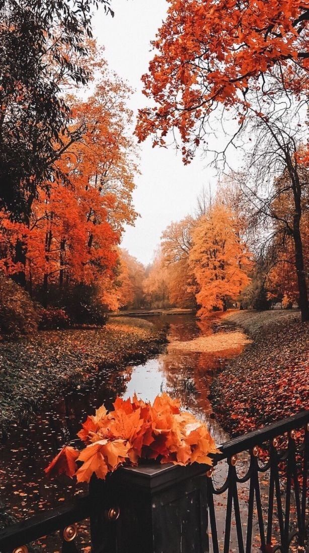 Pinterest Eydeirrac Autumn Scenery Fall Wallpaper Autumn Photography