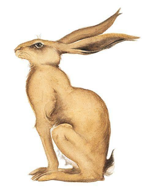 Golden Hare. Watercolour. Jackie Morris