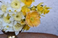 daffodils and glowing poppy - milky white and buttery yellow