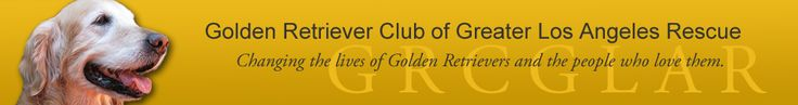 Golden Retriever Club of Greater Los Angeles Rescue. Where Nizzle came from :)