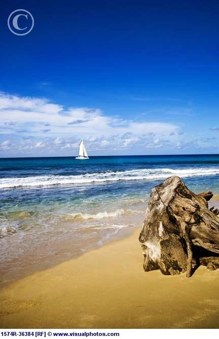 Driftwood On The Beach...Beach Seashore, Amo Praia, Ocean Beach, Blue Sky, Heart Throbs, Cobalt Blue, My Heart, Beach Ey, Beach Lov