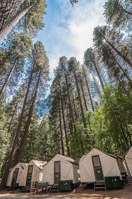 142 best images about inlove with yosemite on pinterest for Yosemite park camping cabins