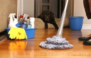 5 vinyl floor cleaners (part1)