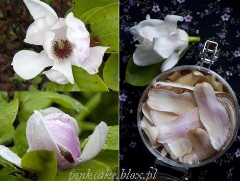 Marynowane magnolie