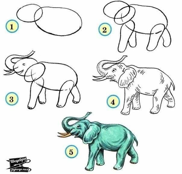 zoo easy draw animals wild animal drawings drawing