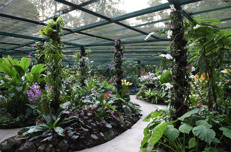 Singapore Botanic Gardens declared UNESCO World Heritage Site - Channel NewsAsia