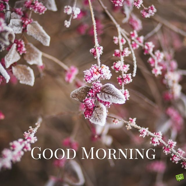 good morning image with pink winter flowers