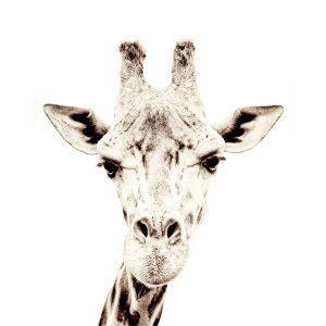 Carta da parati magnetica giraffa piccola