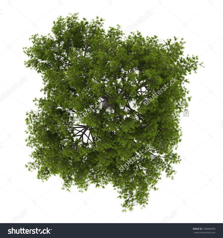 Billedresultat for trees top view
