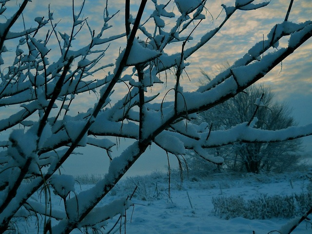 Last Night's Snow by Kathy Mereand, via Flickr