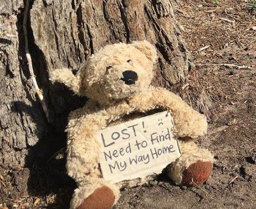Lost teddy Found in Mornington Peninsula, Australia and he wants to go home. Contact this facebook page: https://www.facebook.com/media/set/?set=a.10153960666520358.1073741856.64735605357